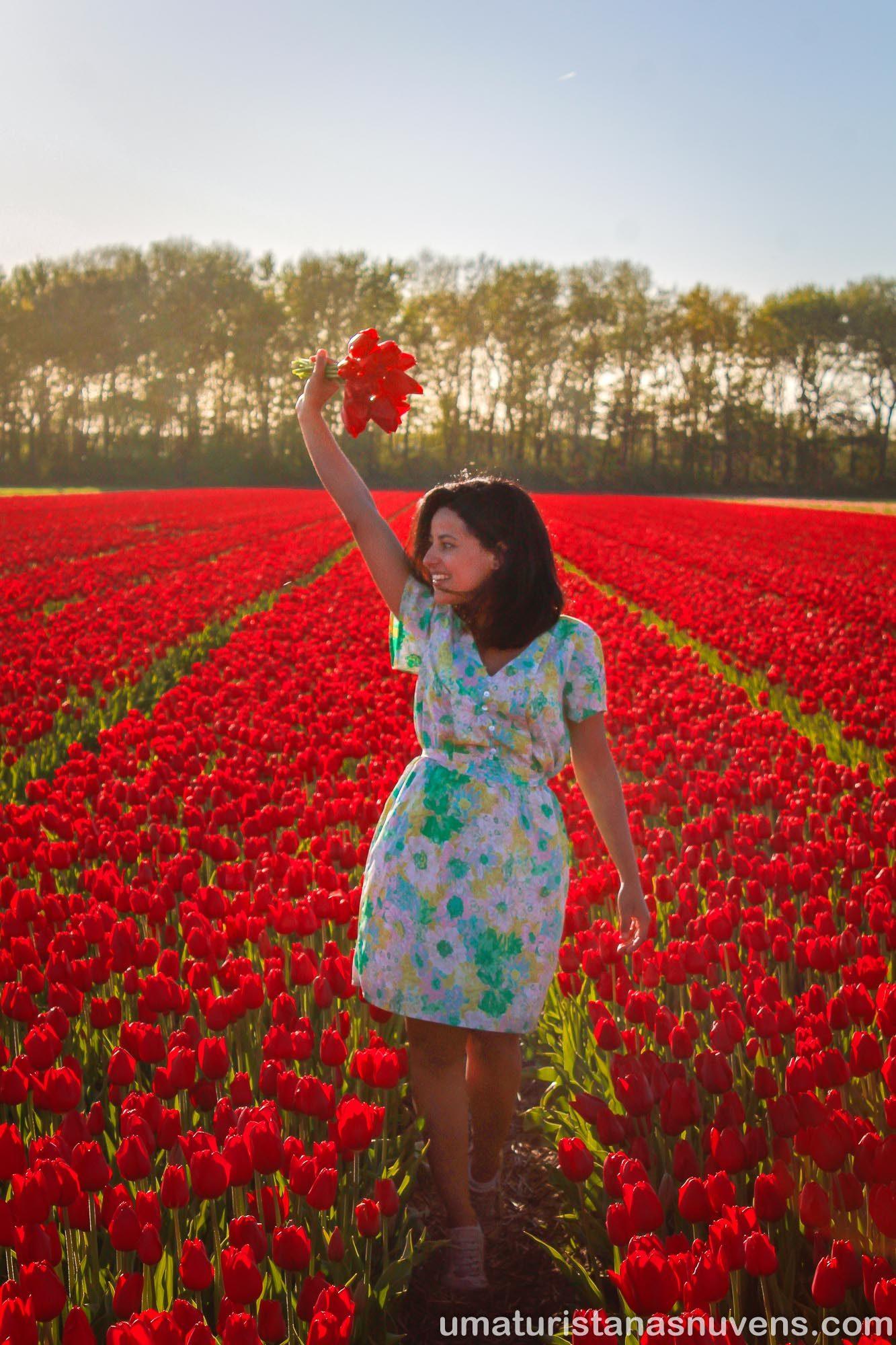 Campos de tulipa - Holanda - keukenhof